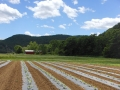 lyonsvillefarm