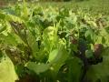 plantsgrowing