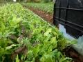 plantsinfield
